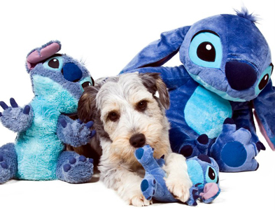 Stitch - Agility - A-SIT